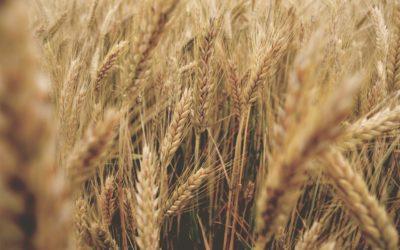 FoodTech Tomorrow – Nytt trendspanande event om framtidens livsmedelsindustri